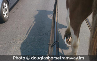 Photo  douglashorsetramway.im